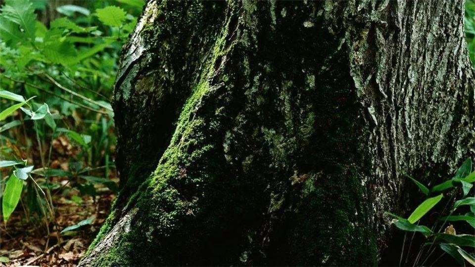 派格森丨木纹系列集成墙面产品,源于自然,胜于自然